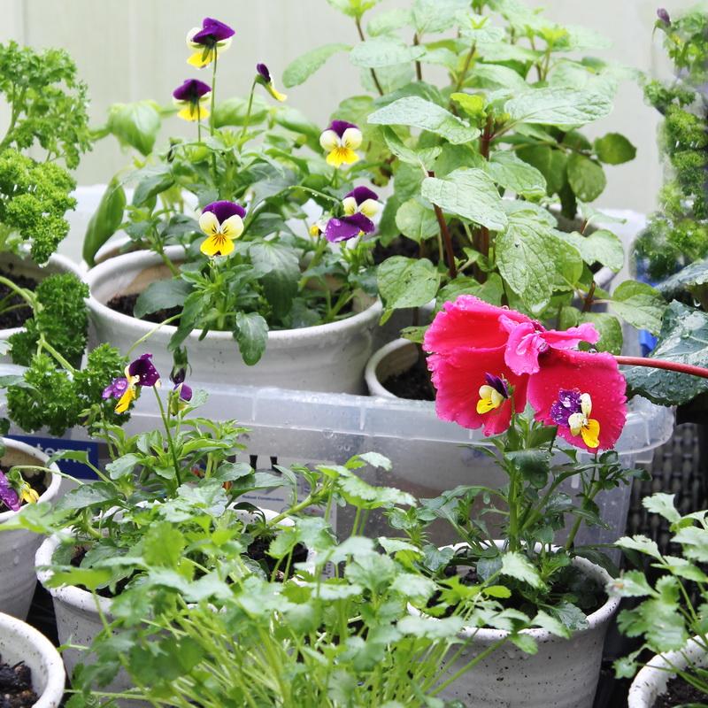 Garden sq 800